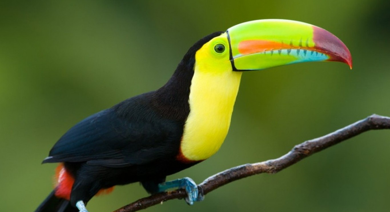image COLORFUL COSTA RICA